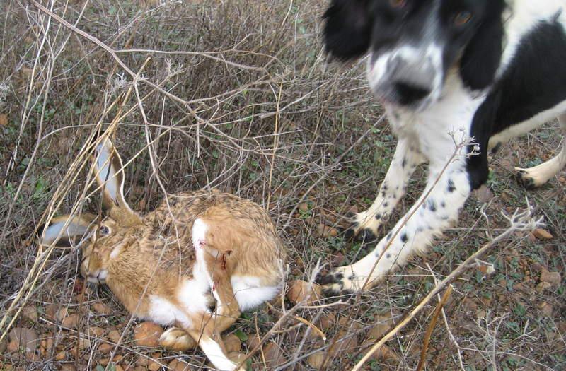 Liebre y perro