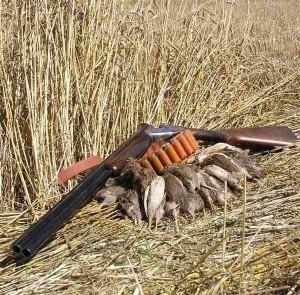 Escopeta caza codorniz - Caza de la codorniz